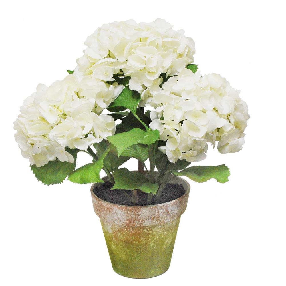 19 in. Potted Hydrangea