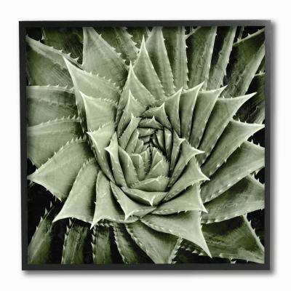 "12 in. x 12 in. ""Green Spiked Swirling Succulent Bloom Botanical"" by Artist Mia Jensen Framed Wall Art"