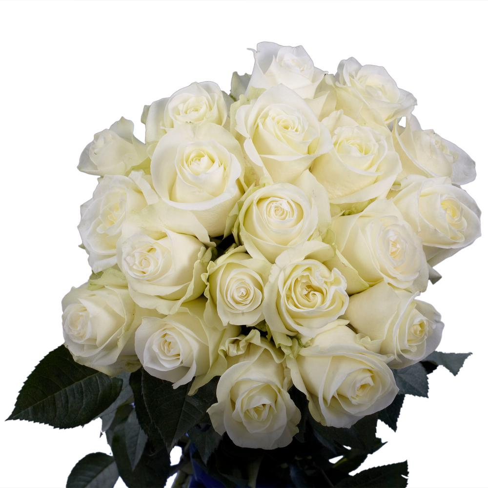 Globalrose Fresh White Roses 50 Stems 50 White Roses Short The