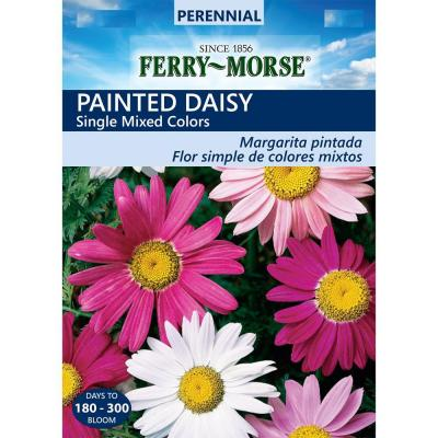Painted Daisy Single Mixed Colors Seeds