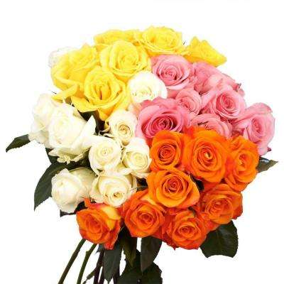 Fresh Assorted Color Roses for Mother's Day (75 Extra Long Stems)