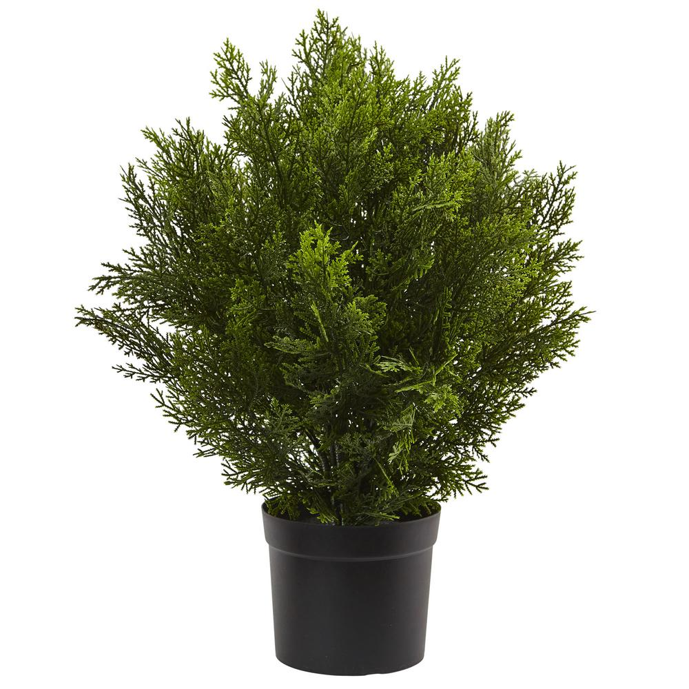 2 ft. Cedar Bush (Indoor/Outdoor)