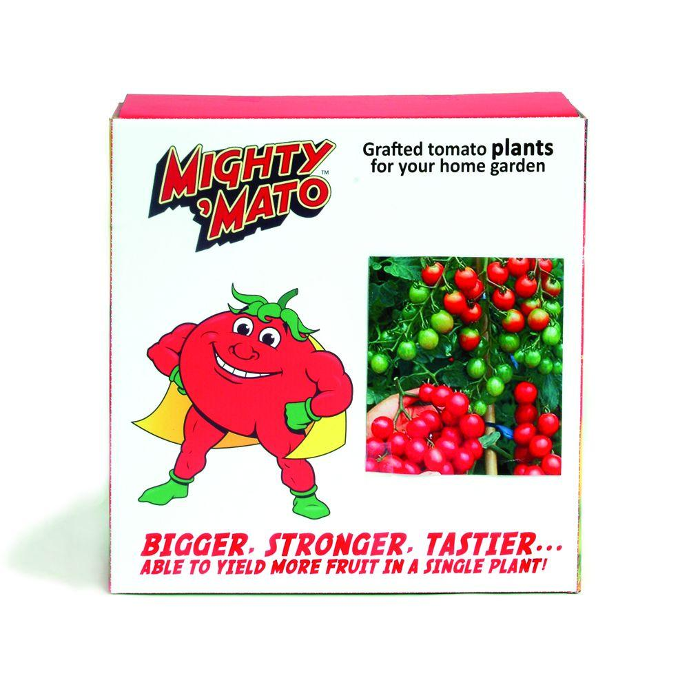 Mighty 'Mato Sweet Million Grafted Tomato Plant (3-Pack)-DISCONTINUED