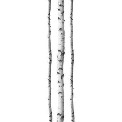 Silver Birches Wall Decal