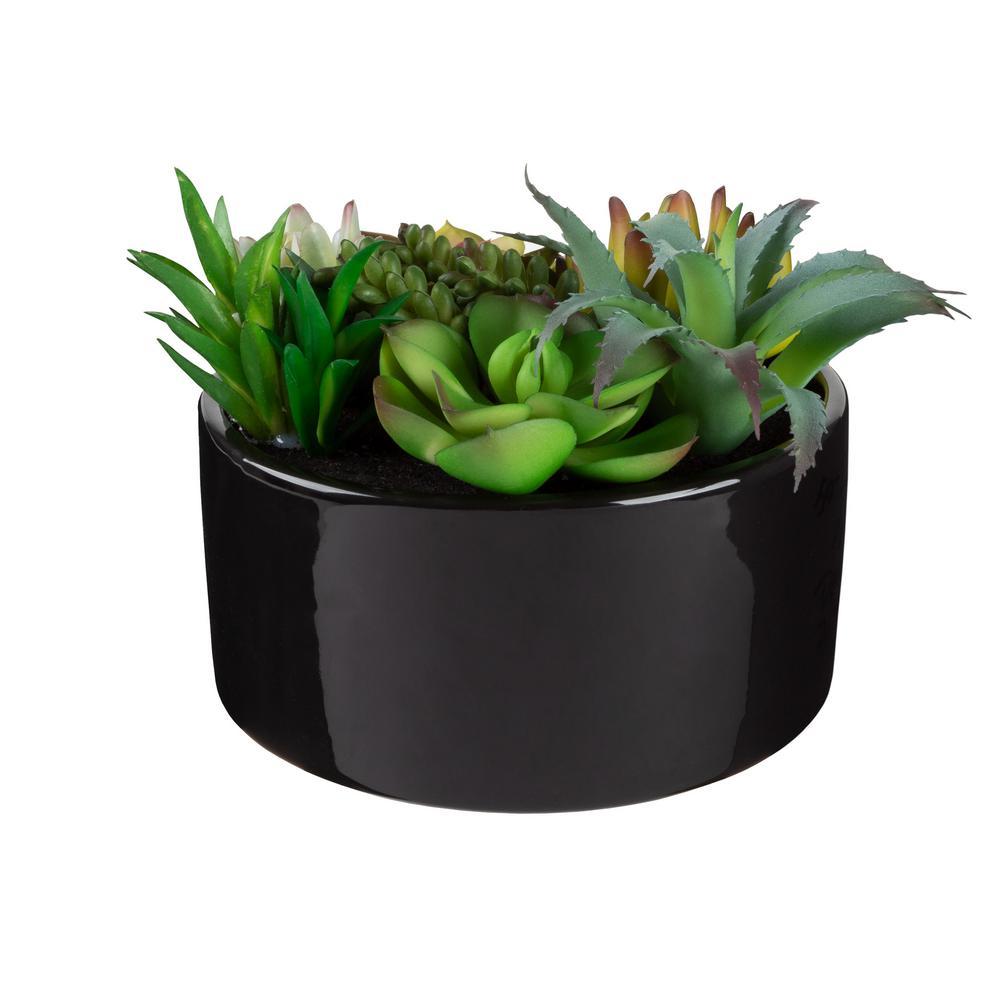 6 in. Artificial Succulent Plant Arrangement in Black Glazed Ceramic Pot