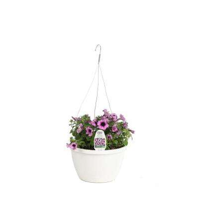 DIY Hanging Basket Kit Supertunia Bordeaux Flower Pillow with 10 in. Container