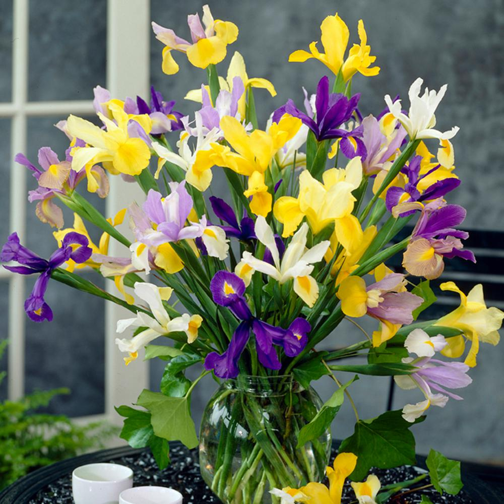 Iris flower bulbs garden plants flowers the home depot dutch iris mixed bulbs set of 25 izmirmasajfo