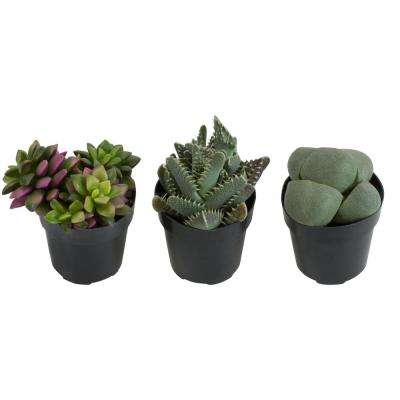 2.5 in. Assorted Mimicry Succulent Plant (3-Pack)