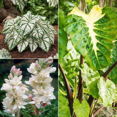 Assorted mix 7 0 to 10 f white flower bulbs garden plants color your garden white collection bulbs 12 set mightylinksfo