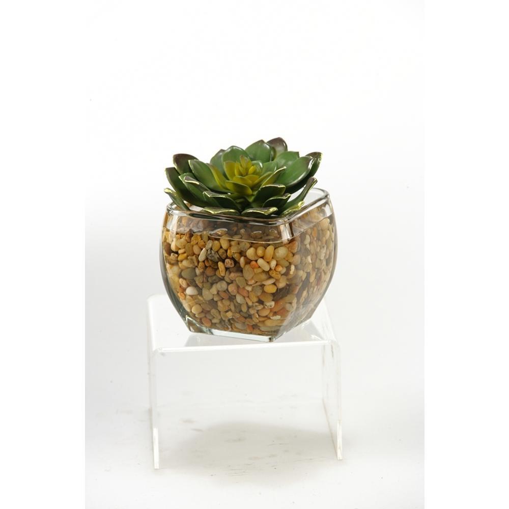 Indoor Large Echeveria in Glass Cube