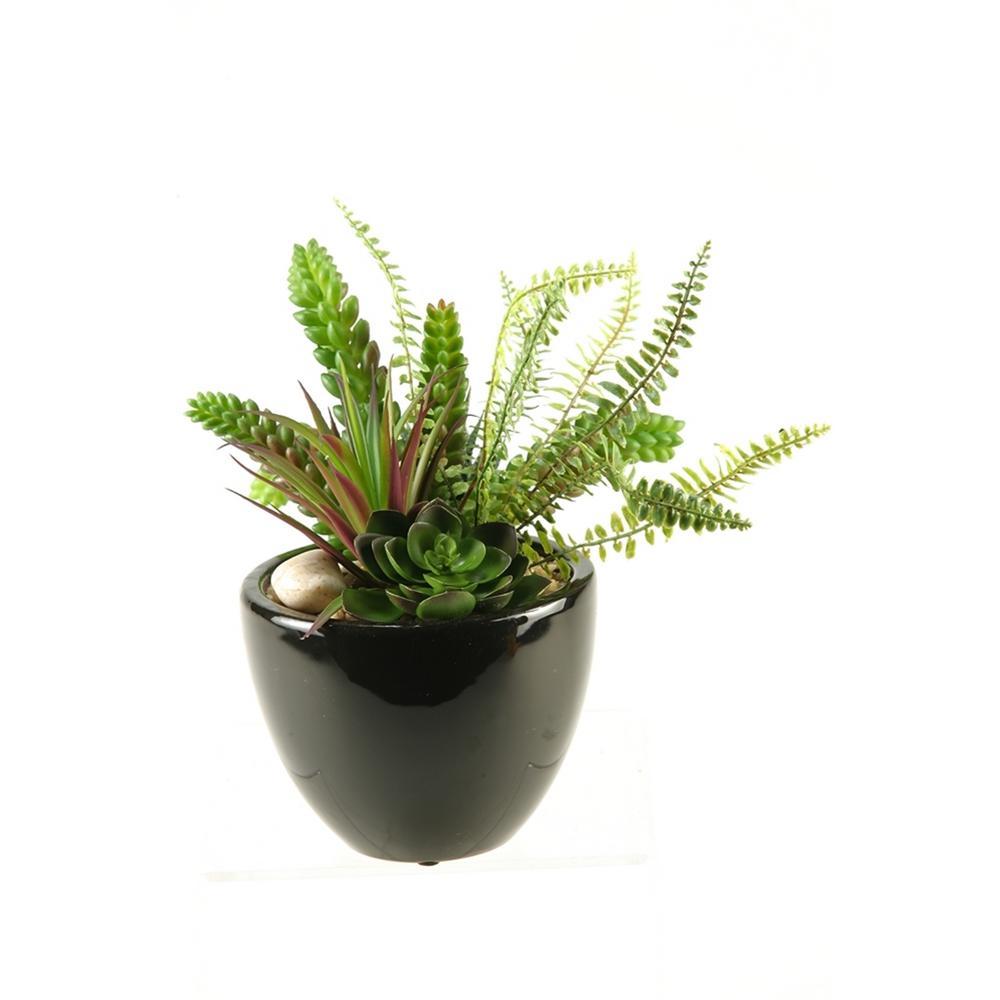 Indoor Succulent, Aloe and Echeveria in Round Ceramic Planter
