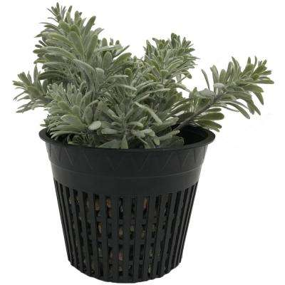 5 in. Net Pots, Round Cup with Slotted Plastic Mesh (25-pack)