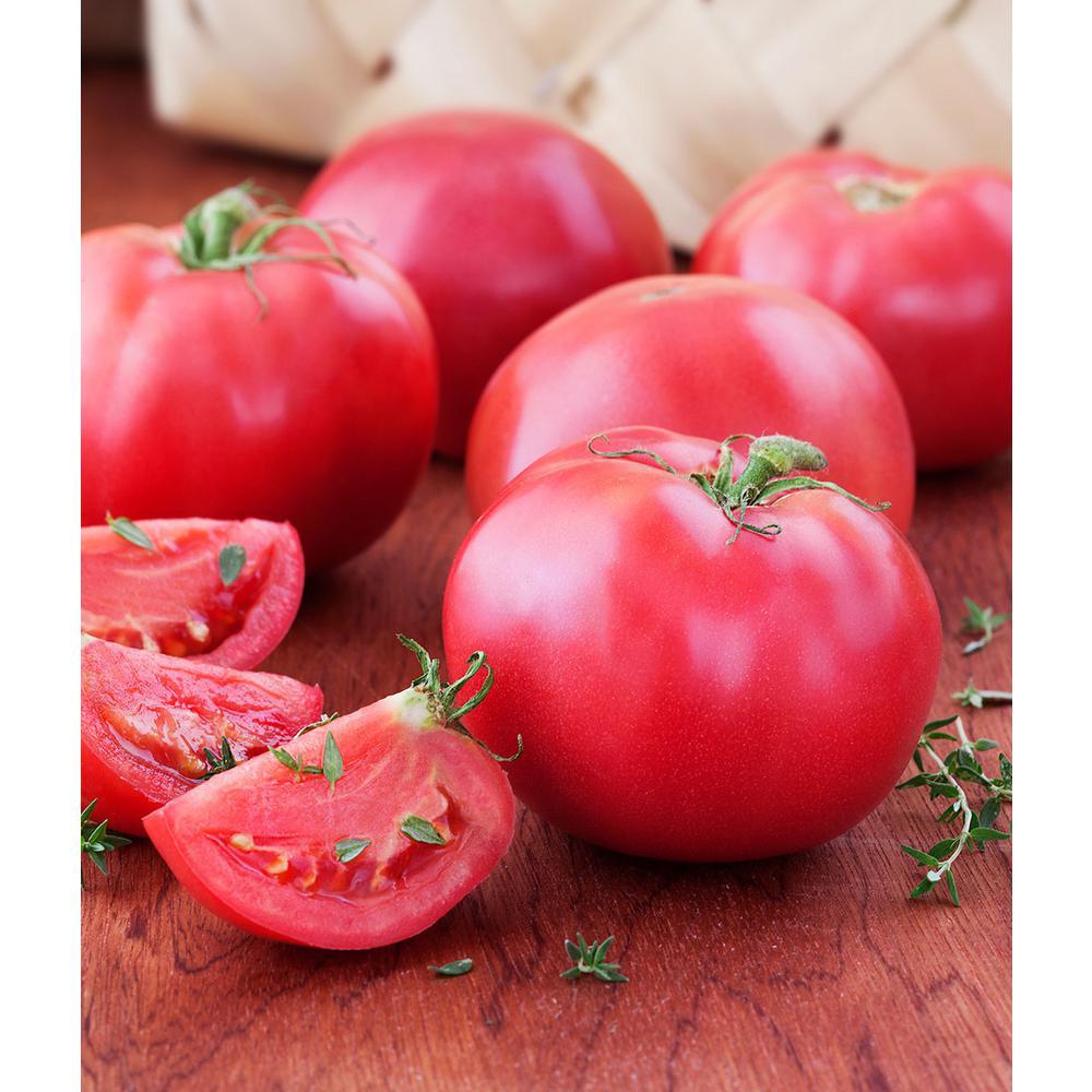 Bonnie Plants 606 Tomato-Bradley-Heirloom Pack