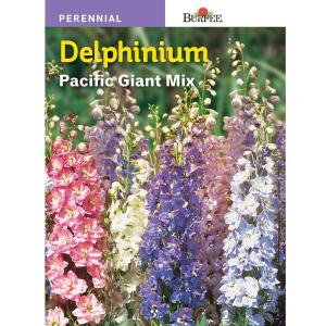 Burpee Delphinium Giant Pacific Mix Seed 43745 The Home Depot