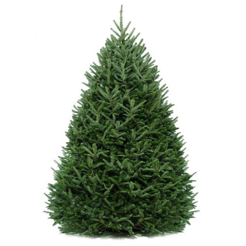 6.5 Ft Fraser Fir Real Christmas Tree Artificial Unlit ...