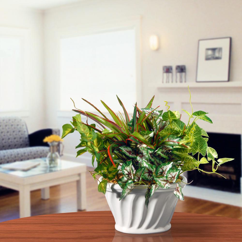 Table Plant in Ceramic Pot