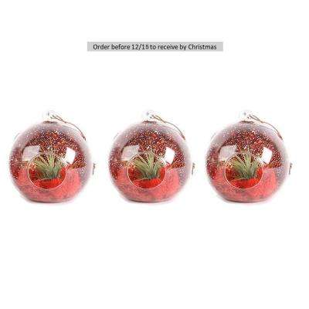 Christmas Globe Airplant Terrarium Ornaments (3-Pack)