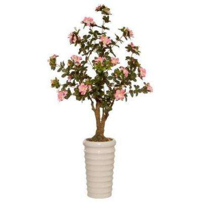 41 in. Rhododendron Tree