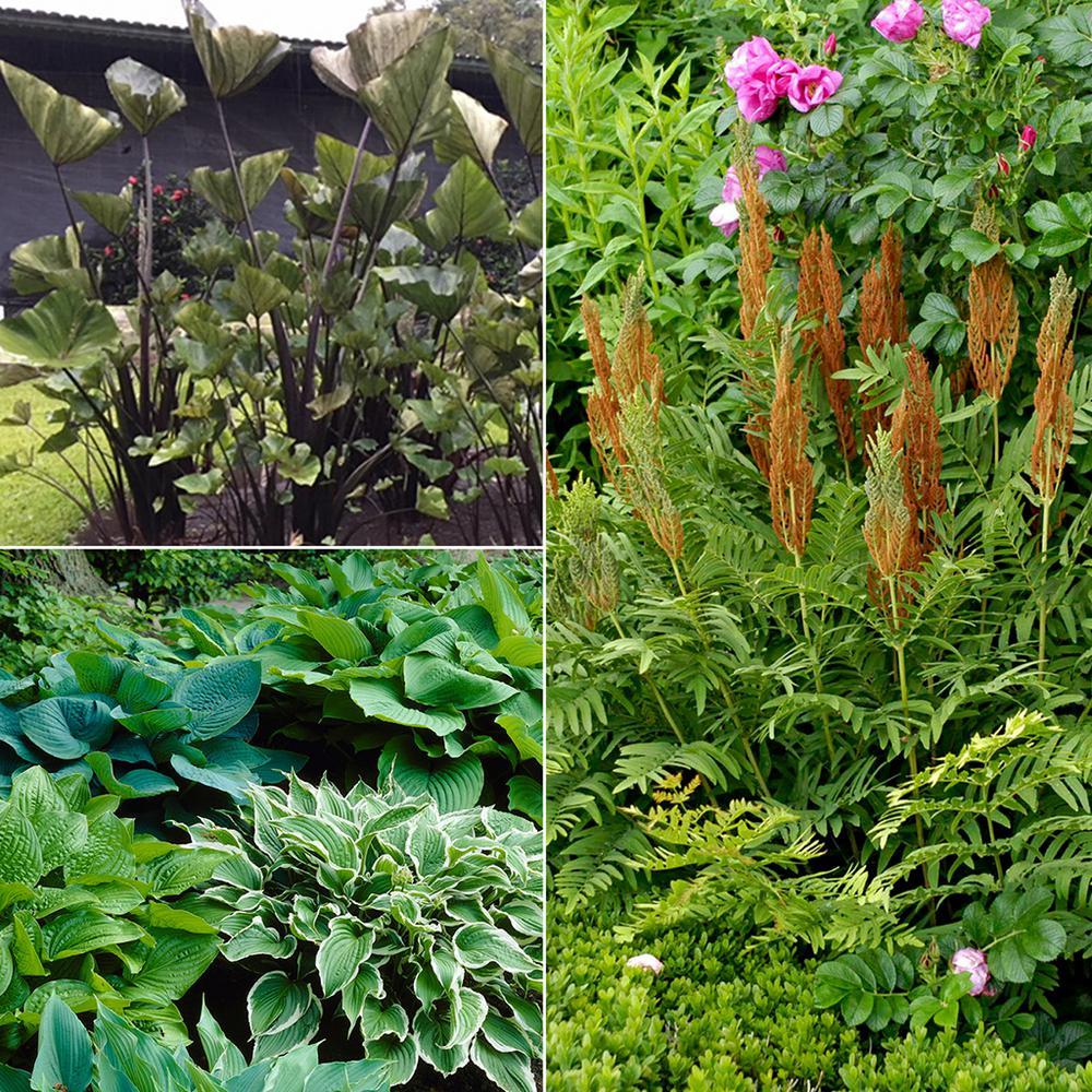 Color Your Garden Green  Collection  Bulbs (10-Set)