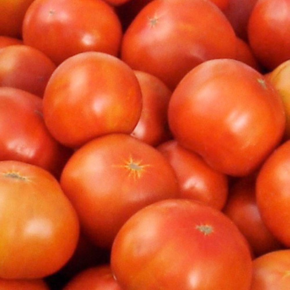Bonnie Plants 6pk Tomato Jet Star