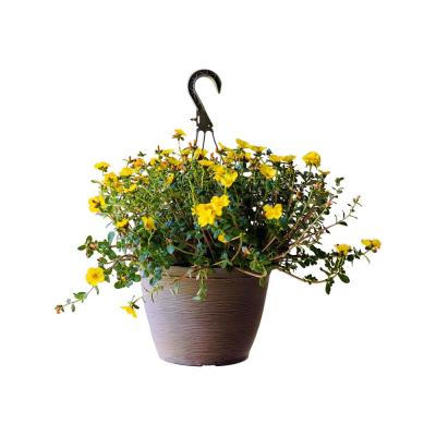 1.8 Gal. Purslane Plant Yellow Flowers in 11 In. Hanging Basket