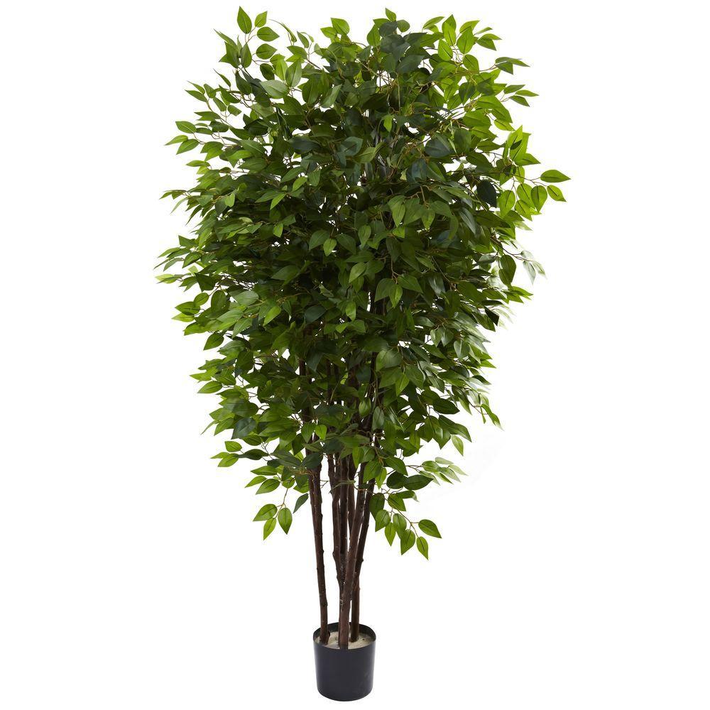 6.5 ft. Deluxe Ficus Tree