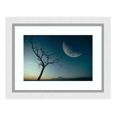 """""""Whistling Thorn and moon, Amboseli National Park, Kenya, East Africa"""" by Gerry Ellis Framed Wall Art"""