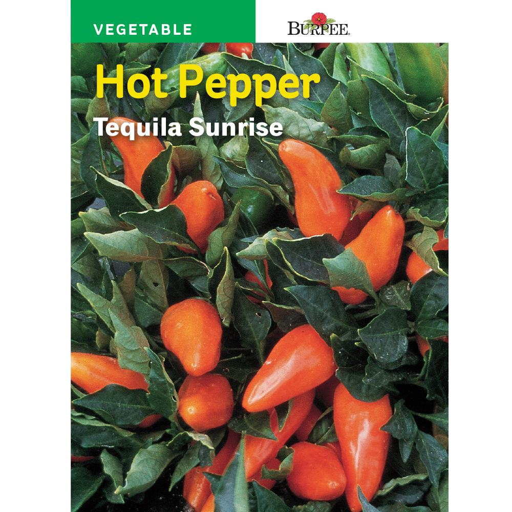 Burpee Pepper Hot Tequila Sunrise Seed 62118 The Home Depot