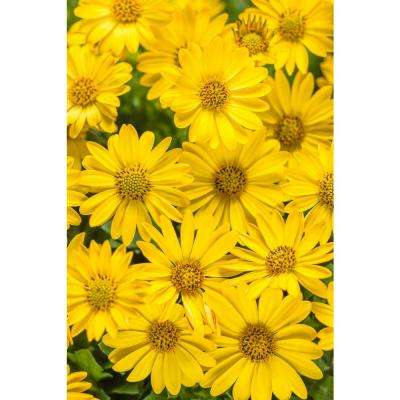 Yellow annuals garden plants flowers the home depot bright lights yellow mightylinksfo