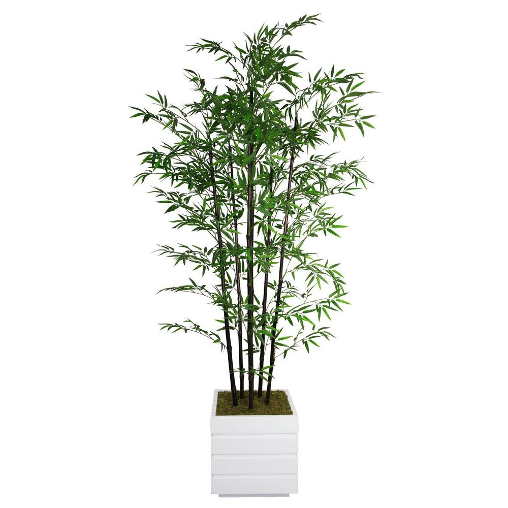 Tall Black Bamboo Tree In 14 Fiberstone Planter Vhx106211 The Home Depot