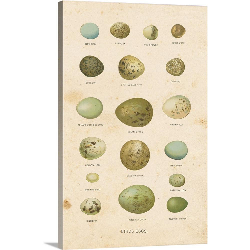 """""""Birds Eggs I"""" by Gwendolyn Babbitt Canvas Wall Art"""