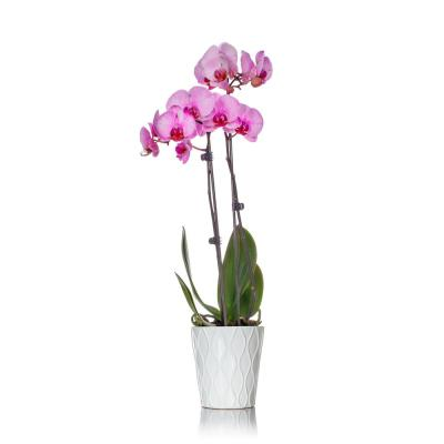 Classic Pink Watercolor Orchid in Ceramic Pot