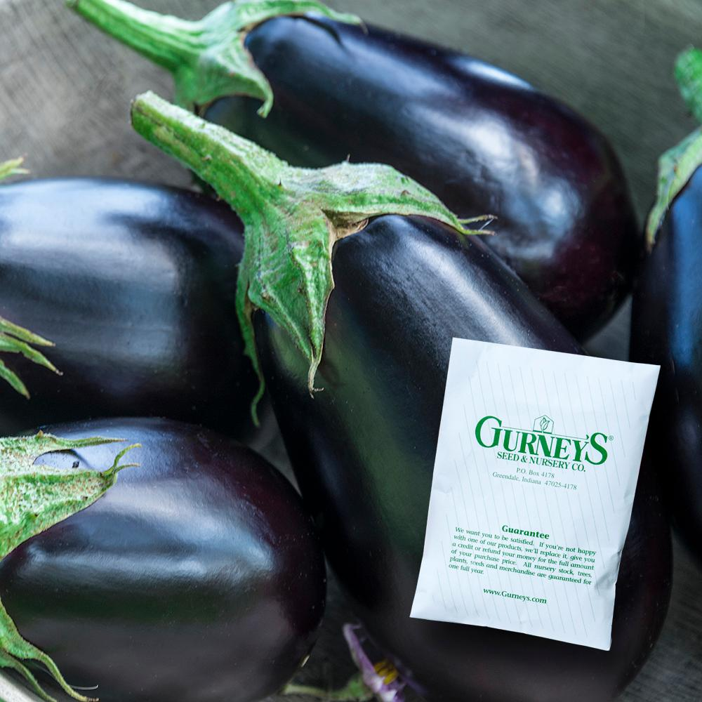 Gurney's Eggplant Midnight Queen Hybrid (30 Seed Packet)