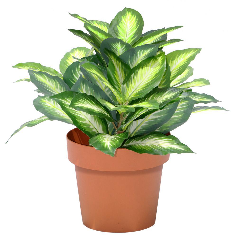15 in. Hosta Plant