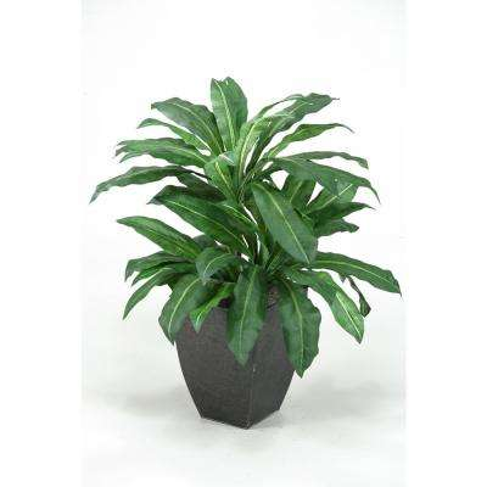 Indoor Birdnest Palm Plant in Square Metal Planter