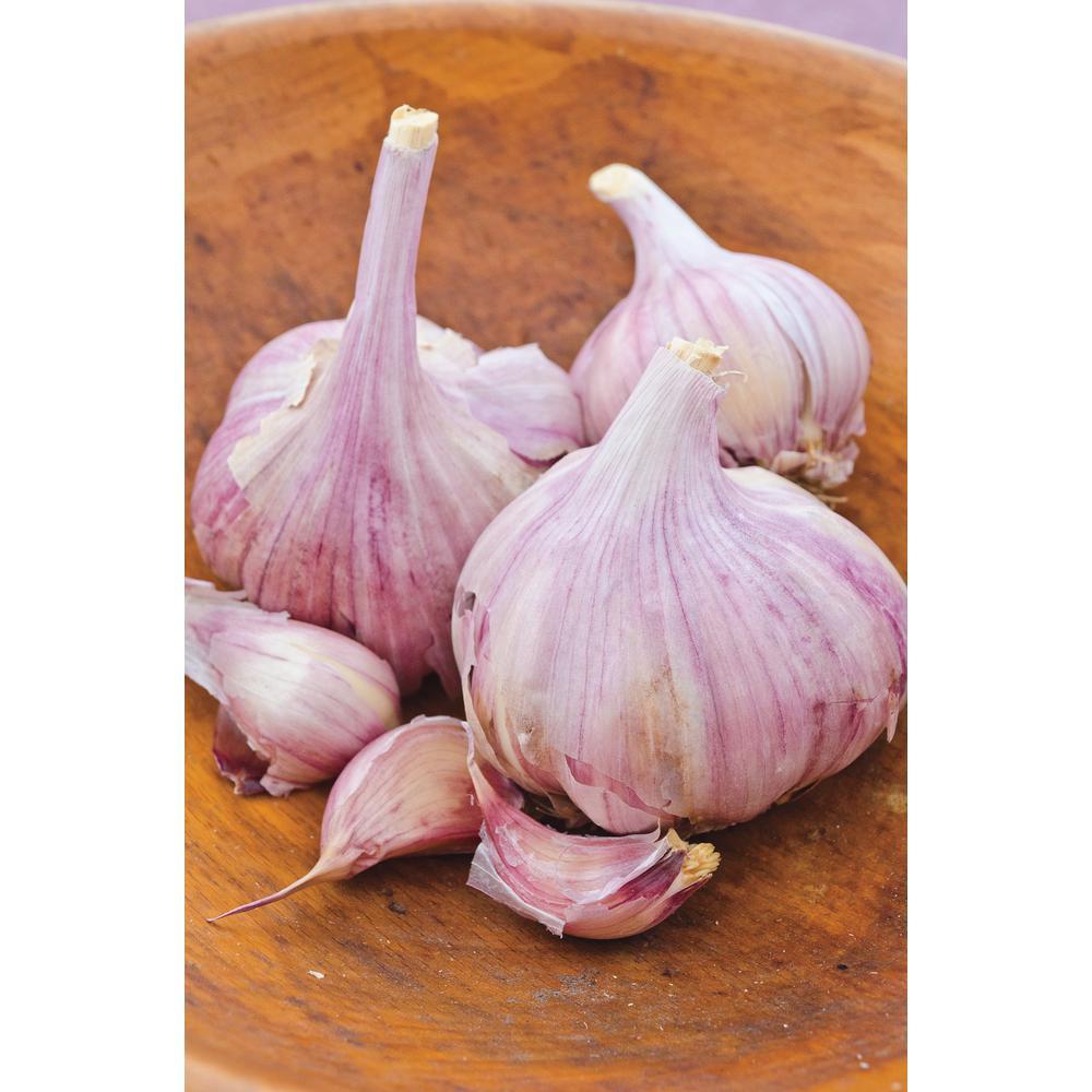 Deerfield Purple Hardneck Garlic Bulbs