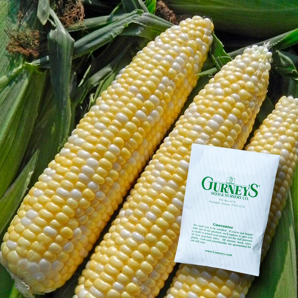 Gurney S Sweet Corn Allure 100 Seed Packet
