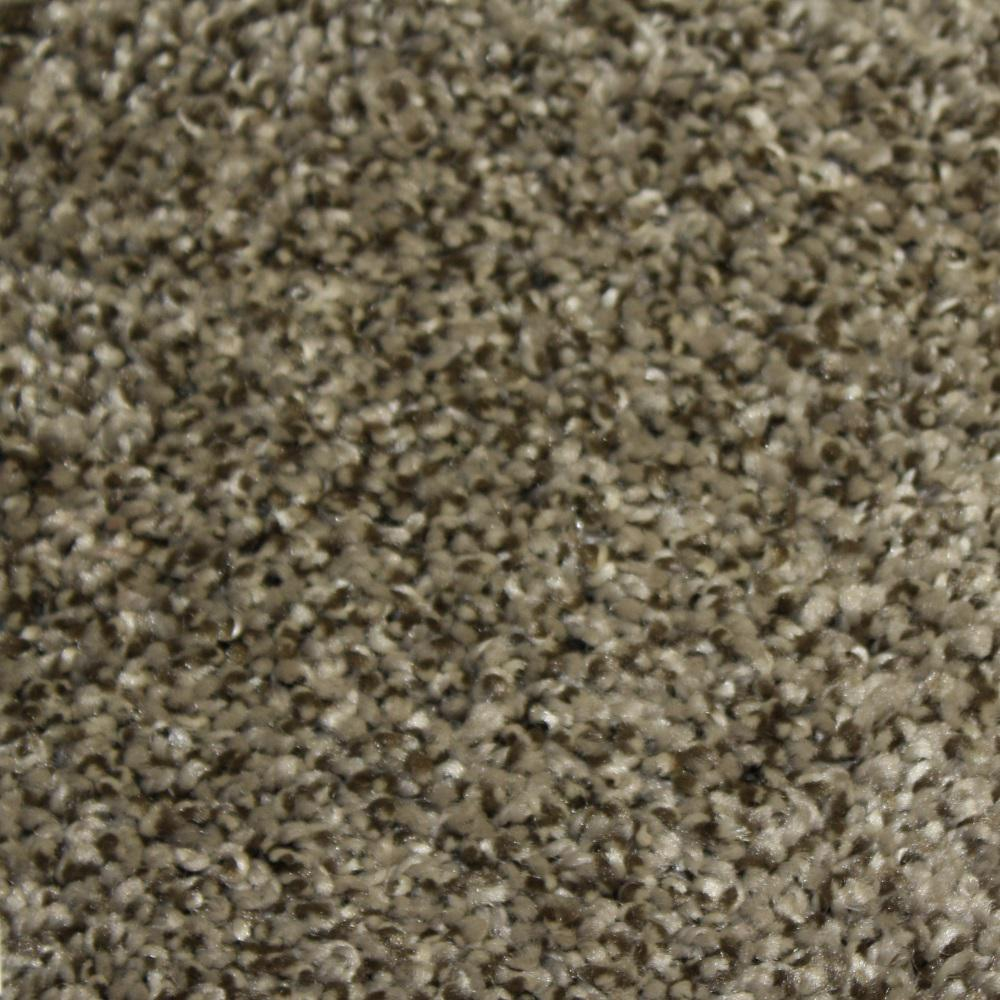 Home Decorators Collection Carpet Sample Shackelford II Color Endurance Texture 8 In X
