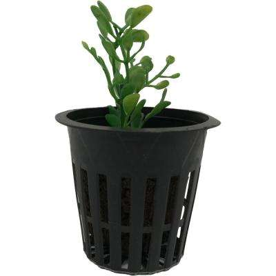 2 in. Net Pots, Round Cup with Slotted Plastic Mesh (50-Pack)