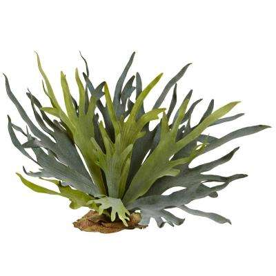 21 in. Staghorn Fern (Set of 2)