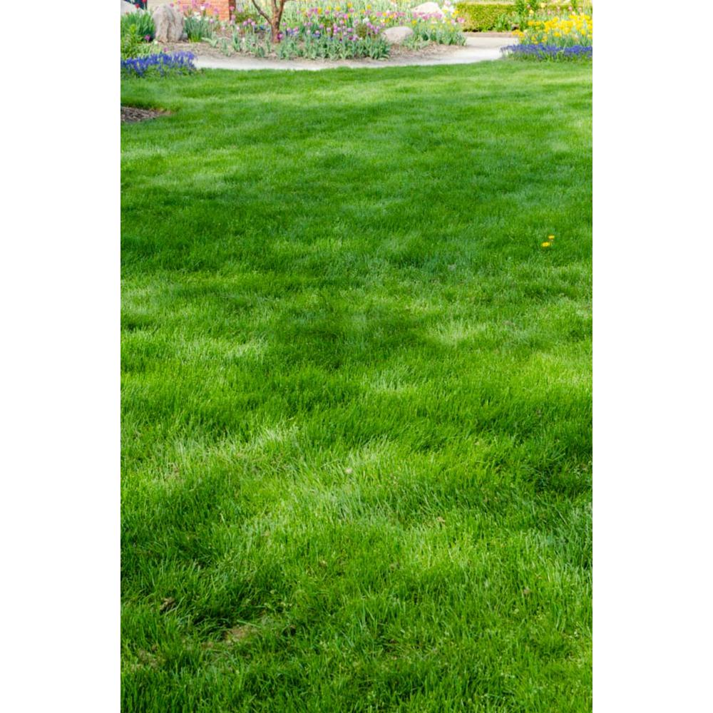 6 lbs. All-Ways Greener Grass Seed Mixture