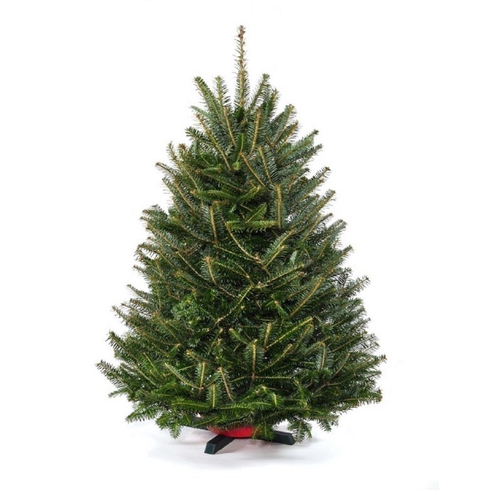 Real Christmas Tree.Cottage Farms Direct 3 5 Ft To 4 Ft Freshly Cut Table Top Fraser Fir Christmas Tree With Stand