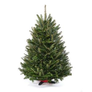 3.5 ft to 4 ft. Freshly Cut Table Top Fraser Fir Christmas Tree