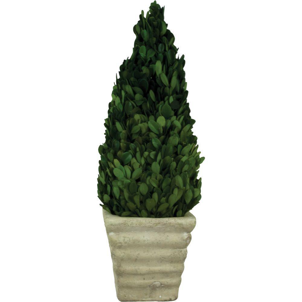 4.75 in. W x 15 in. H Preserved Boxwood Cone in White Terracotta Pot