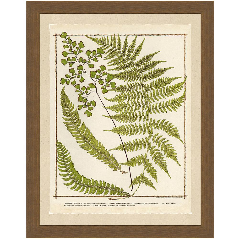 Ferns I Framed Archival Paper Wall Art (22x28)