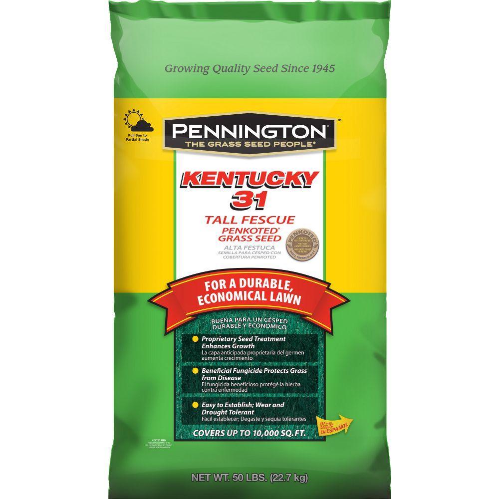 Pennington Kentucky 31 50 Lb Tall Fescue Penkoted Grass Seed