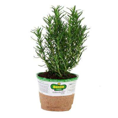 4 in. 14.6 oz. Organic Rosemary
