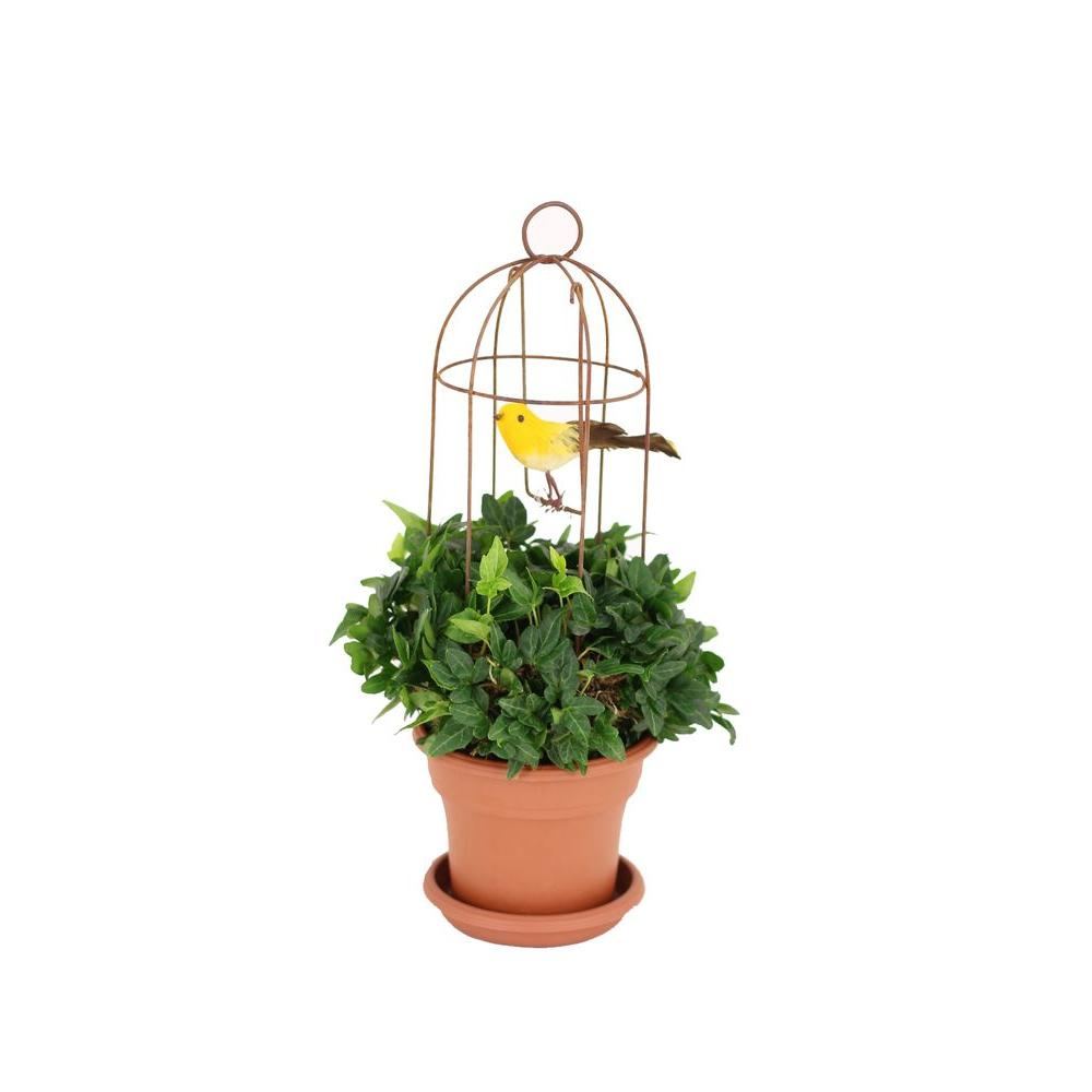 4.25 in. Mossed Ivy Rustica Bird Cage in Pot and Saucer