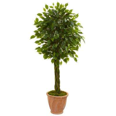 4 ft. High Indoor/Outdoor Braided Ficus Artificial Tree in Terracotta Planter