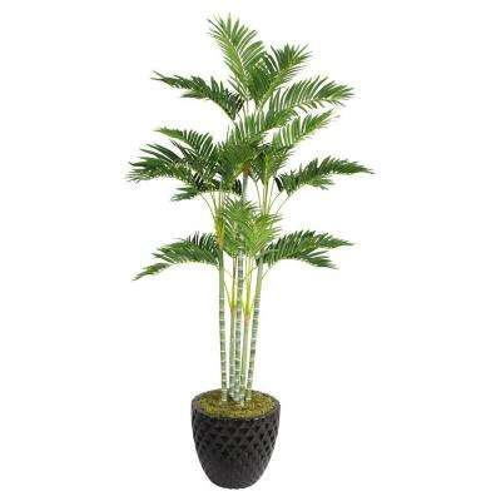 74 in. Tall Palm Tree in 16 in. Fiberstone Planter